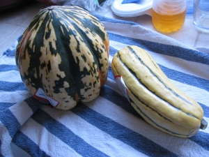 Two types of winter squash